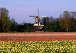 Holland tulipán show 2018.
