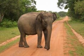 Srí Lanka körút + üdülés Holiday Island**** szigetén